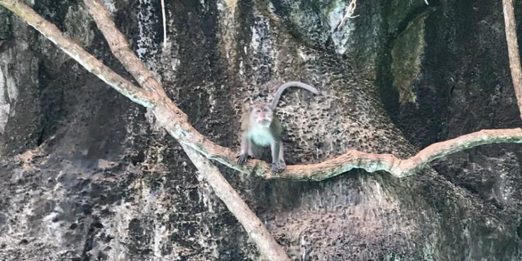 Monkey Island Ko Phi Phi Don